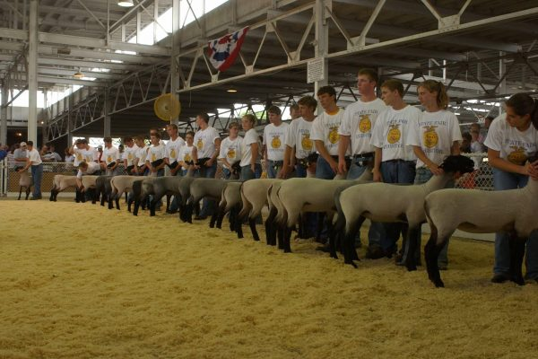 FFA members pose with their sheep in the Sheep Barn.