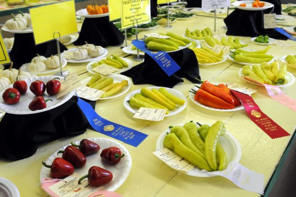 Winners of the pepper vegetable contest on display.