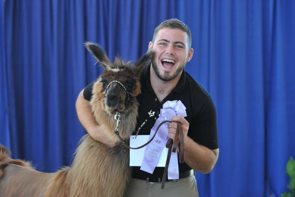 An excited exhibitor shows off his Reserve Grand Champion llama and ribbon.