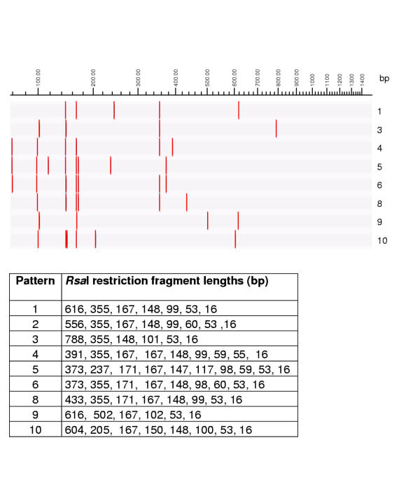 Rsa I restriction patterns of mycobacterial 16S rRNA genes, theoretically calculated using RFLP (Applied Maths) and published GenBank sequences. Graphical representation and table of restriction fragment lengths for each of the possible patterns.