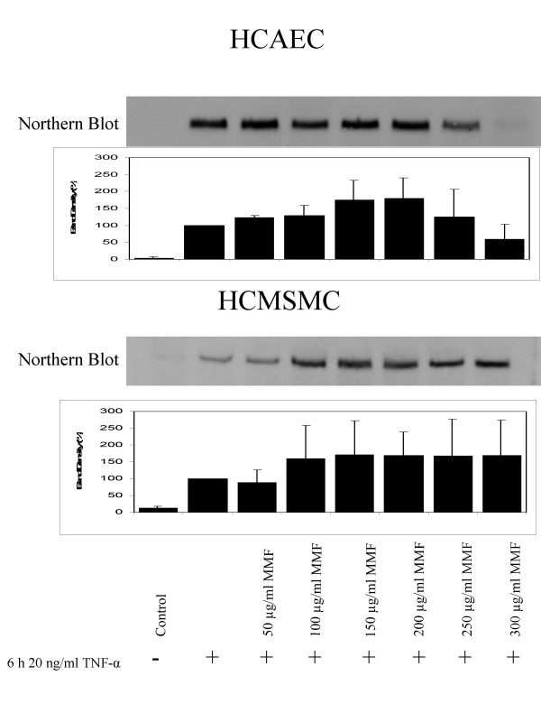 Northern blots and relative band densities of TNF-α-induced expression of ICAM-1 mRNA after incubation of HCAECs and HCMSMCs with 50, 100, 150, 200, 250, and 300 μg/mL of MMF.