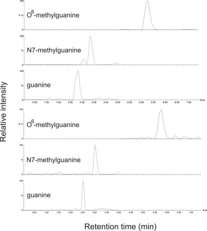 Detection of methylated guanines by HPLC-MS/MS. The top three panels are traces of a mixture of the indicated standard compounds while the bottom three panels are traces from formic acid hydrolyzed MNNG treated (300 μM) phiX174 RFI DNA.