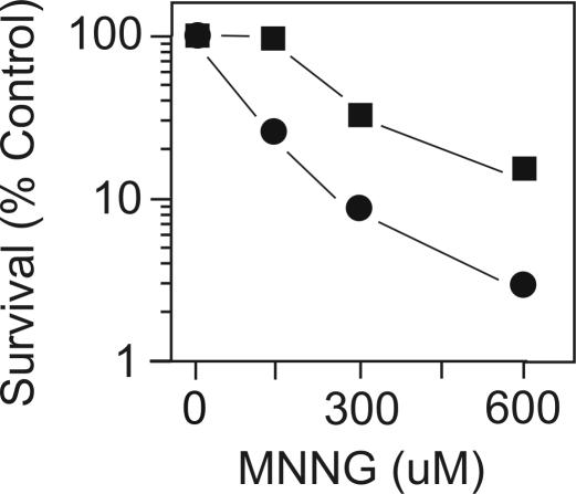 Phage <t>phiX174</t> DNA survival after MNNG exposure. PhiX174 <t>RFI</t> DNA was incubated with the indicated concentrations of MNNG as described in Materials and Methods and used to transfect strains MV1161 (wild type) and MV3855 ( alkA tagA ) and survival determined by plaque formation.