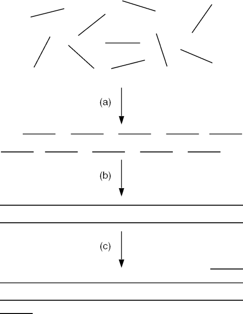 The assembly PCR method for constructing long DNA molecules. ( a ) In the first PCR step a pool of oligodeoxynucleotides anneal and are ( b ) elongated to produce a full-length DNA molecule. In addition to the full-length product, a host of shorter molecules also results. ( c ) In the second PCR step the desired full-length molecule is selectively amplified from the mixture using primers specific for the desired full-length product.