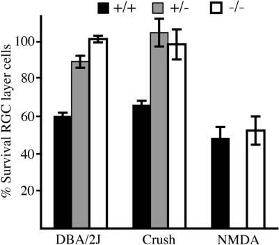 Mechanical Axon Insult, but Not Excitotoxicity, Induces BAX-Dependent RGC Death To help distinguish between the likely roles of mechanical axon insult and excitotoxicity in cell death induction in spontaneous glaucoma, we subjected preglaucomatous DBA/2J mice of each Bax genotype to either controlled optic nerve crush or NMDA-mediated excitotoxicity. For controlled crush and NMDA, the percent RGC survival in the manipulated eye compared to the contralateral control eye is shown. For ease of comparison, the data for glaucomatous damage are the same as shown in Figure 3 . In contrast to the spontaneous glaucoma, NMDA-mediated RGC death is not dependent on BAX, as evident by the complete lack of protection from death in Bax −/− mice. As for the spontaneous glaucoma, RGC death induced by controlled optic nerve crush was completely dependent on BAX and prevented in both Bax +/− and Bax −/− mice. Overall, the effects of BAX in the face of spontaneous glaucoma and controlled crush were remarkably similar.