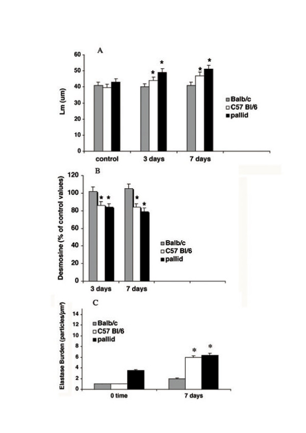 Mean linear intercepts, lung desmosine and elastase burden in various strains of mice following bleomycin challenge. (A) Mean linear intercepts (Lm) in Balb/C, C57 Bl/6 and pallid mice after bleomycin challenge. Data are from 10 animals for each time point and are given as mean ± SD. *: p