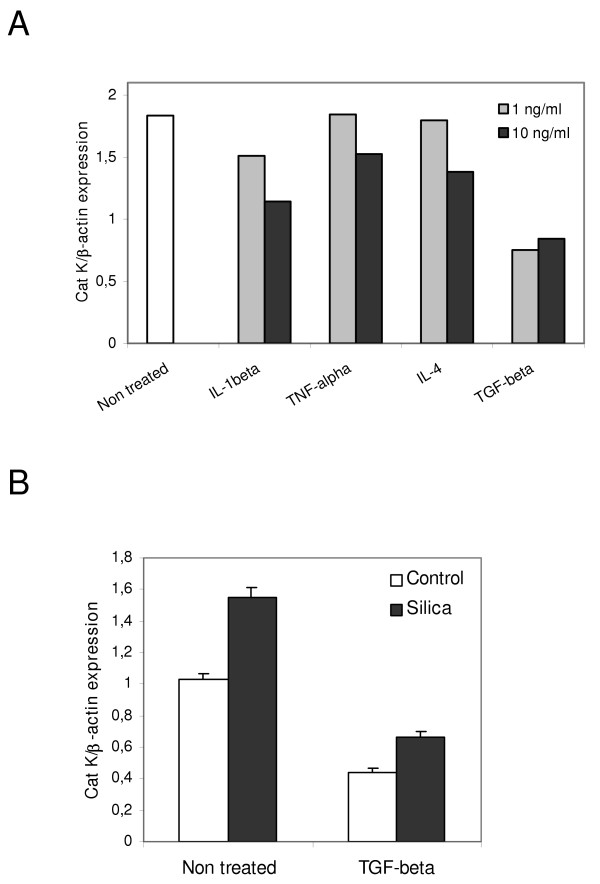 Cat K expression is reduced in response to TGF-β1 in control and silicotic mouse lung fibroblasts. Cat K mRNA quantification in pulmonary fibroblasts of C57BL/6 mice. (A) Control fibroblasts were incubated with 1 or 10 ng cytokine/ml. Bars represent the mean of triplicate measurements of Cat K expression on the same sample. The Cat K downregulation by TGF-β was reproduced in 4 independent experiments. (B) Fibroblasts from control (pool of 10 animals) and silicotic (pool of 7 animals, silica) mice collected 2 months after instillation and incubated at least in duplicates without (non-treated) or with 10 ng TGF-β1/ml (TGF-beta). The results are representative of 2 independent experiments ( P