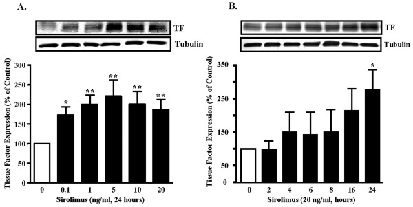 Sirolimus up-regulates tissue factor (TF) expression in SMC. (A). Sirolimus enhances TF expression in a concentration- and (B) time-dependent manner in human SMC. n = 6, * = p