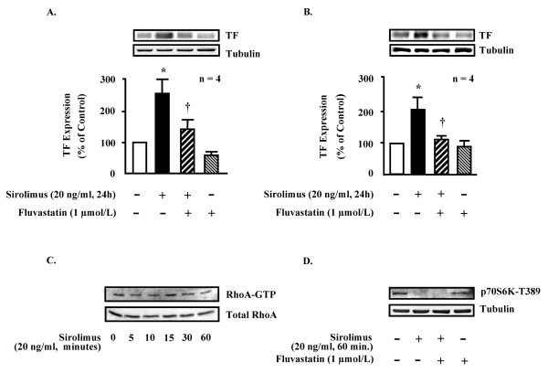Fluvastatin inhibits TF expression in SMC. In human saphenous vein SMC (HSVSMC, panel A, n = 4) as well as in human aortic SMC (HAoSMC, panel B, n = 4) sirolimus (20 ng/ml, 24 hours) up-regulated TF expression which was significantly inhibited by fluvastatin (1 μmol/L). Basal activity of RhoA was not influenced by sirolimus (20 ng/ml, n = 3, panel C), while the basal activity of mTOR was fully inhibited by sirolimus (20 ng/ml, 1 hour, n = 3, panel D). * = p