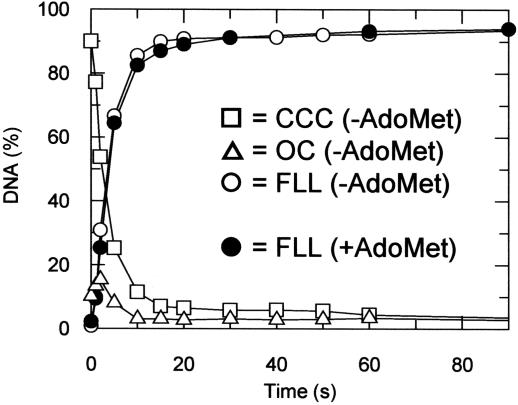 Rate of DNA cleavage by the PstII restriction endonuclease. pLJP11b (5 nM) was incubated for various times with saturating PstII and 4 mM ATP at 37°C (see main text for full details). Where indicated AdoMet was included at 100 μM. The CCC substrate (squares) was separated from the OC intermediate (triangles) and FLL product (circles) by agarose gel electrophoresis (data not shown). Fragments were excised and the percentages of the 3 H-labelled DNA fragments quantified by scintillation counting.
