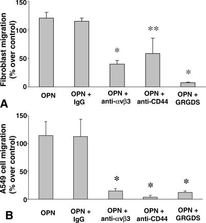 Effect of Osteopontin on Fibroblasts and Epithelial Cell Migration Fibroblasts (A) and A549 epithelial cells (B) were placed in the upper compartment of a Boyden-type chamber, and Ham's F-12 medium containing 5% BSA alone or with 10 μg/ml of osteopontin was added to the lower compartment. After 8 h of incubation, the migrating cells were stained, and the absorbance of the stained solution was measured by ELISA. In parallel experiments, osteopontin-stimulated cells were treated with anti-α v β 3 , anti-CD44, and GRGDS. Each bar represents the mean ± SD of three experiments; * p