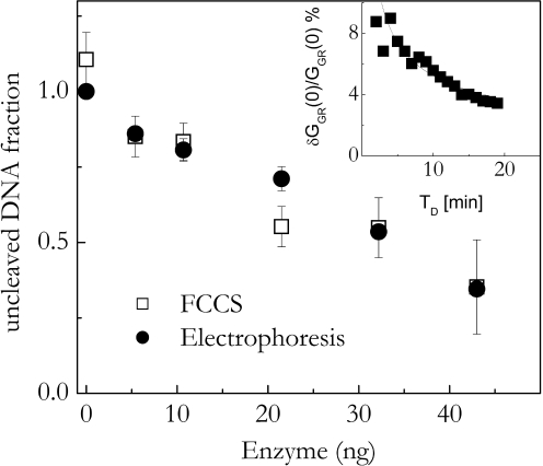 Comparison of the FCCS to the electrophoresis assay. Closed circles are the fraction of the uncleaved DNA fragments obtained from digestion with the HeLa cell extracts as measured by autoradiograph, open squares are from FCCS assay. Open squares are the estimates obtained from the cross-correlation amplitude extrapolated to zero lag time. The reference concentration for both sets is the one (150 nM) of the sample analysed by electrophoresis at 0 enzyme concentration. Bars indicate standard errors. Inset: percent standard error on the best fit cross-correlation data at zero delay time, G GR (0), versus the experiment duration, T D . The fitting of the cross-correlation functions has been performed by keeping the diffusion coefficient D constant to the value of the 30mer DNA. The solid line is a best fit with the function ≈ T D − 0.5 .
