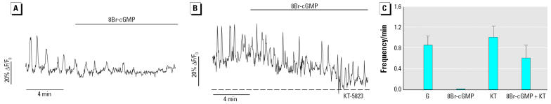 Effects of 8Br-cGMP on EDCs and E 2 via PKG. ( A ) Exposure to 10 μM 8Br-cGMP dramatically reduces the frequency of low-glucose–induced [Ca 2+ ] i oscillations. ( B ) After incubation with the specific PKG inhibitor KT-5823 (1 μM), 8Br-cGMP fails to evoke the marked reduction in [Ca 2+ ] i oscillations shown in ( A ). ( C ) Mean frequency values collected in the presence of 0.5 mM glucose (G), 8Br-cGMP plus 0.5 mM glucose (8Br-cGMP), KT-5823 (KT), and 8Br-cGMP plus KT-5823 (8Br-cGMP + KT). Results are representative of at least five cells in four different islets, expressed as mean ± SE.