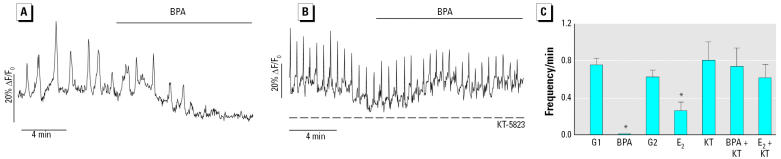 Effects of BPA on [Ca 2+ ] i oscillations through a PKG-mediated mechanism. ( A ) Low-glucose–induced [Ca 2+ ] i oscillations blocked by 1 nM BPA. ( B ) Frequency of [Ca 2+ ] i oscillations were not reduced by BPA in an islet from the same preparation and maintained in the same conditions but pretreated with and exposed to the PKG inhibitor <t>KT-5823</t> (1 μM). ( C ) Mean frequency values of 0.5 mM glucose before application of either BPA (G1) or E 2 (G2), in the presence of 1 nM BPA or 1 nM E 2 , as in ( A ) , or in the presence of 1 μM KT-5823 plus 0.5 mM glucose (KT); KT plus 1 nM BPA (BPA + KT), and KT plus 1 nM 17β-E 2 (E 2 + KT) as in ( B ). Results are representative of at least 12 cells from nine different islets, expressed as mean ± SE. * p