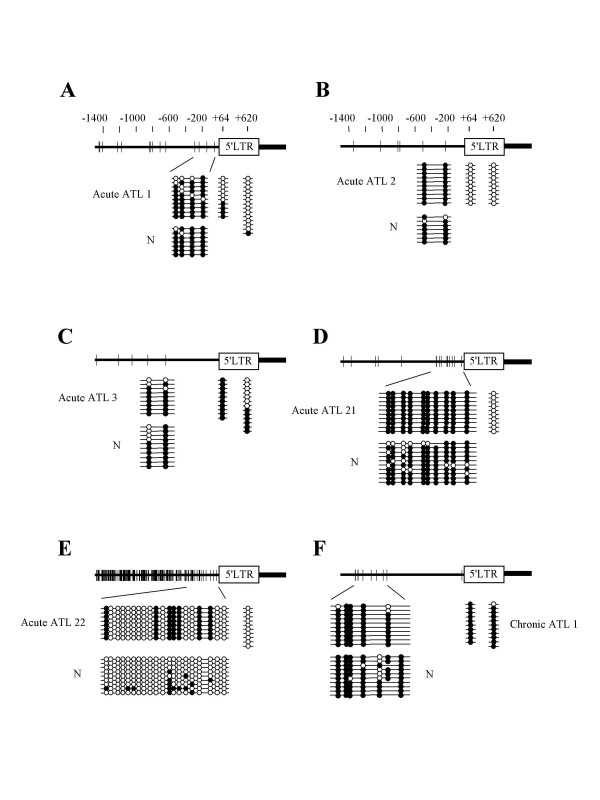<t>DNA</t> methylation of provirus is not associated with methylated CpG sites in the genome. Integration sites of HTLV-I provirus in leukemic cells have been determined by inverse <t>PCR,</t> and then DNA methylation in genome has been analyzed by sodium bisulfite sequencing. DNA methylation of 5'-LTR was also analyzed by sodium bisulfite sequencing method. Vertical bars represent CpG sites. Open circle indicates unmethylated CpG site, and closed one means methylated CpG site. N: normal PBMCs from non-carrier donor.
