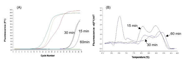 Amplification curves (A) and melting curves (B) of 18SrRNA amplified by real-time PCR using the RT-minus product of the cell lysate treated for 15, 30 and 60 min with 0.08 U/μl RNase-free DNase I.