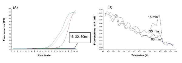 Amplification curves (A) and melting curves (B) of 18SrRNA amplified by real-time PCR using the RT – minus product of the cell lysate treated for 15, 30 and 60 min with 0.16 U/μl RNase-free DNase I.