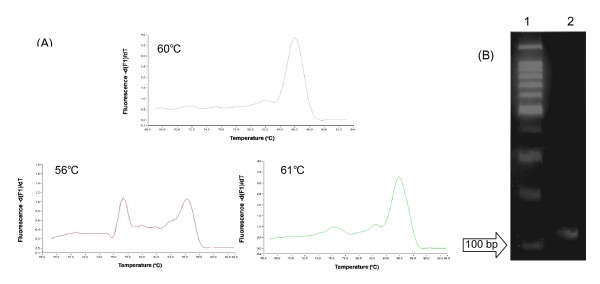 Melting curve (A) amplified at various annealing temparature and gel-electrophoresis pattern (B) of 18SrRNA amplified at 60° of annealing temperature by real-time PCR using the RT product of the cell lysate treated with 0.16 U/μl <t>RNase-free</t> <t>DNase</t> I for 30 min. Lane 1: 100-bp Ladder size marker; Lane 2: amplification product of 18SrRNA (120 bp) in gel-electrophoresis pattern.