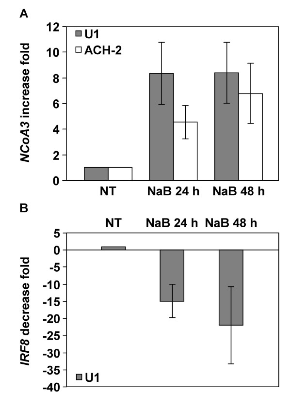 Real-time RT-PCR analysis of NCoA3 and IRF8 mRNAs expression in NaB-treated U1 and ACH-2 cells . Total RNAs were isolated from U1 or ACH-2 cells treated or not with NaB for 24 h and 48 h and real-time PCR were performed on cDNAs using gene specific primers for NCoA3 , IRF8 or Cyclophilin A . NCoA3 and IRF8 expressions were normalized to the expression of Cyclophilin A . The NCoA3 increase fold (A) in U1 (solid bars) or ACH-2 (white bars) cells and the IRF8 decrease fold (B) in U1 cells treated with NaB for 24 h and 48 h compared to non-treated (NT) cells were determined. Results represent the means of five independent experiments performed in duplicate.