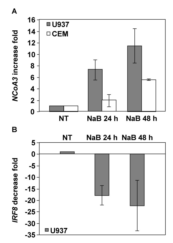 Real-time RT-PCR analysis of NCoA3 and IRF8 mRNAs expression in NaB-treated U937 and CEM cells . Total RNAs were isolated from U937 or CEM cells treated or not with NaB for 24 h and 48 h and real-time PCR were performed on cDNAs using gene specific primers for NCoA3 , IRF8 or Cyclophilin A . NCoA3 and IRF8 expressions were normalized to the expression of Cyclophilin A . The NCoA3 increase fold (A) in U937 (solid bars) or CEM (white bars) cells and the IRF8 decrease fold (B) in U937 cells treated with NaB for 24 h and 48 h compared to non-treated (NT) cells were determined. Results represent the means of five independent experiments performed in duplicate.