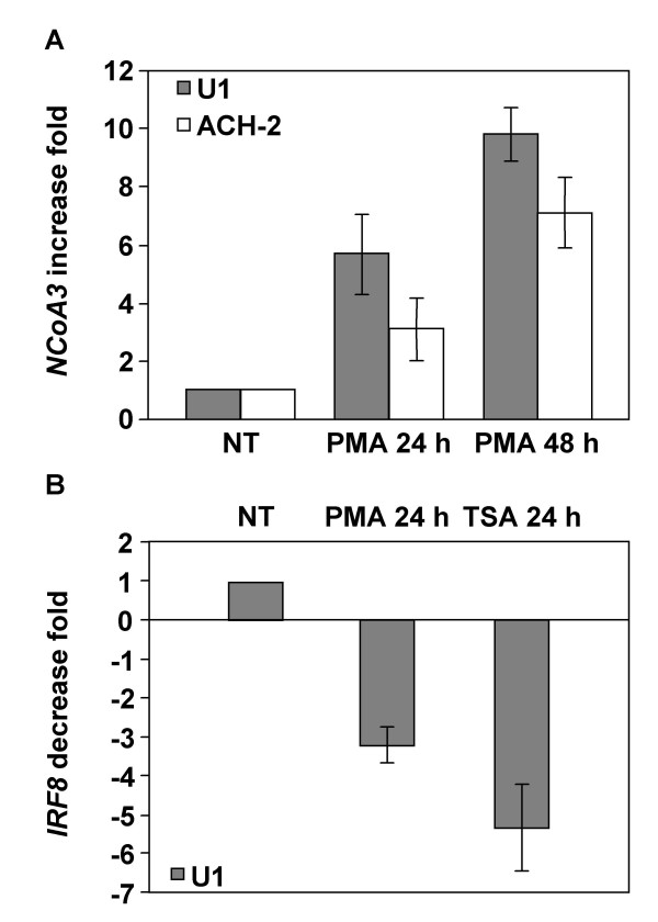 Real-time RT-PCR analysis of NCoA3 and IRF8 mRNAs expression in PMA- or TSA-treated U1 and ACH-2 cells . Total RNAs were isolated from U1 or ACH-2 cells treated or not with PMA for 24 h and 48 h or TSA for 24 h and real-time PCR were performed on cDNAs using gene specific primers for NCoA3 , IRF8 or Cyclophilin A . NCoA3 and IRF8 expressions were normalized to the expression of Cyclophilin A . The NCoA3 increase fold (A) in U1 (solid bars) or ACH-2 (white bars) cells treated with PMA for 24 h and 48 h and the IRF8 decrease fold (B) in U1 cells treated with PMA or TSA for 24 h compared to non-treated (NT) cells were determined. Results represent the means of three independent experiments performed in duplicate.