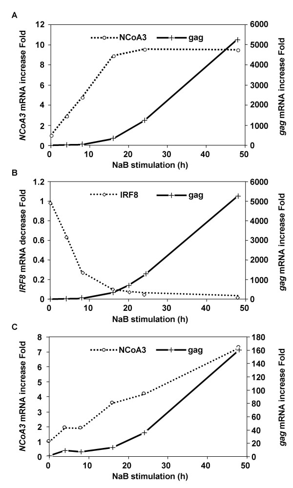 Analysis of HIV gag , NCoA3 , and IRF8 mRNA expression after NaB stimulation on U1 and ACH-2 cells . U1 (A and B) and ACH-2 (C) cells were stimulated with 10 mM NaB and 5.10 6 cells were taken at t = 0, 4, 8, 16, 24, 48 h for RNA extraction to perform qRT-PCR. NCoA3 (A and C), IRF8 (B) and gag (A, B and C) mRNA contents were measured. Cylophilin A was used as internal standard. Results represent a representative experiment performed in duplicate.