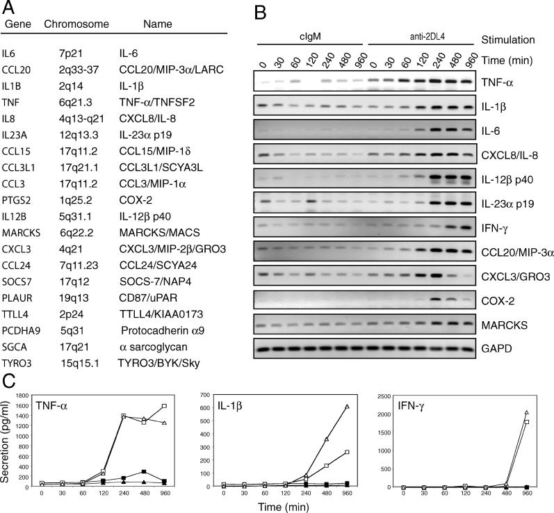 Binding of Soluble mAb to KIR2DL4 Up-regulates Multiple Genes in Resting NK Cells (A) All genes exhibiting greater than 2-fold up-regulation in microarray experiments with resting NK cells of at least two of three different individuals are listed. (B) Semiquantitative RT-PCR was performed on total RNA isolated at different time points from resting NK cells stimulated with either control IgM mAbs or anti-KIR2DL4 IgM mAbs 36 and 64. (C) Time course of TNF-α, IL-1β, and IFN-γ secretion by resting NK cells stimulated with anti-KIR2DL4 mAbs 36 and 64 (open symbols) or control IgM mAbs (closed symbols). Squares and triangles represent data obtained from two different donors. Protein secretion was detected by ELISA.