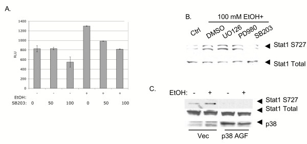 Involvement of p38 MAPK in ethanol induction of ISRE transcription and Stat1 serine phosphorylation. Panel A, Huh7 cells were transfected with 0.7 μg pISRE-luc, and 22 hours later, cells were incubated for 2 hours at the indicated μM concentrations of <t>SB203508</t> (a p38 inhibitor), followed by 100 mM ethanol. Cell lysates were harvested 6 hours later and luciferase results were normalized to amounts of total cellular protein. Error bars represent standard deviations. The experiment was repeated 4 times with identical results. B, Huh7 cells were treated for 2 hours in the presence of 50 μM of various MAPK inhibitors, and stimulated with 100 mM alcohol for 20 minutes. Whole cell protein extracts were blotted for the serine phosphorylated form (S727) or total form of Stat1. The experiment was repeated twice, yielding similar results. C, Huh7 cells were transfected with control vector plasmid (Vec) or a plasmid expressing a dominant negative mutant p38 protein (p38 AGF). Twenty-four hours later, cells were not treated or treated for 20 minutes with 100 mM ethanol. Levels of S727 and total Stat1 and transfected p38 proteins were determined by western blot. The figure is representative of 2 independent experiments that produced similar results.