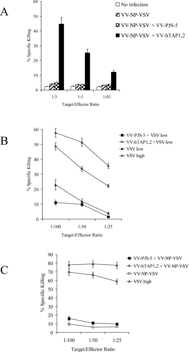 VV-hTAP1,2 Restores Antigen Processing in the TAP-Deficient Cell Line T2-K b and Increases Immune Responses to VSV (A) A standard chromium-release assay was performed to establish the ability of VV-hTAP1,2 to restore antigen processing in the TAP-deficient cell line T2-K b . T2-K b cells coinfected with VV-hTAP1,2 and VV-NP-VSV were used as targets, and splenocytes from VSV-infected mice were used as effectors. Targets coinfected with both VV-PJS-5 and VV-NP-VSV or infected with VV-NP-VSV alone, or uninfected cells, were used as negative controls for VV-hTAP1,2. (B) A standard chromium-release assay was performed to measure the ability of VV-hTAP1,2 to increase specific CTL activity in immunized mice. RMA cells pulsed with VSV-NP 55–59 peptide were used as targets, and effectors were obtained from mice coinfected with VV-hTAP1,2 and low-dose VSV. Effectors from mice coinfected with VSV and VV-PJS-5 or a low dose of VSV alone were used as negative controls for the presence of VV-hTAP1,2 in the coinfections. Effectors from mice infected with a high dose of VSV demonstrated maximal CTL activity and were used as a positive control. (C) A standard chromium-release assay was used to confirm that the increase in immune responses was due to TAP-dependent transport of NP-VSV rather than to nonspecific effects of VV infection on antigen processing. RMA cells pulsed with VSV-NP 55–59 peptide were used as targets, and effectors were obtained from mice coinfected with VV-hTAP1,2 and VV-NP-VSV. Effectors from mice infected with a high dose of VSV were used as positive controls for maximal CTL activity. Effectors from mice coinfected with VV-PJS-5 and VV-NP-VSV or from mice infected with VV-NP-VSV alone were negative controls for the presence of VV-hTAP1,2. Values represent the mean of triplicate measurements ± standard error of the mean.