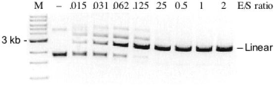 Variant M91V/E156K digestion of plasmid substrate pUC-GCT. The enzyme/substrate (E/S) molar ratio is given above each lane. Lane M, 1 kb DNA ladder. All reactions were incubated at <t>37°C</t> for 60 min in 1 × NEB <t>BamHI</t> buffer. (−) indicates no enzyme addition.