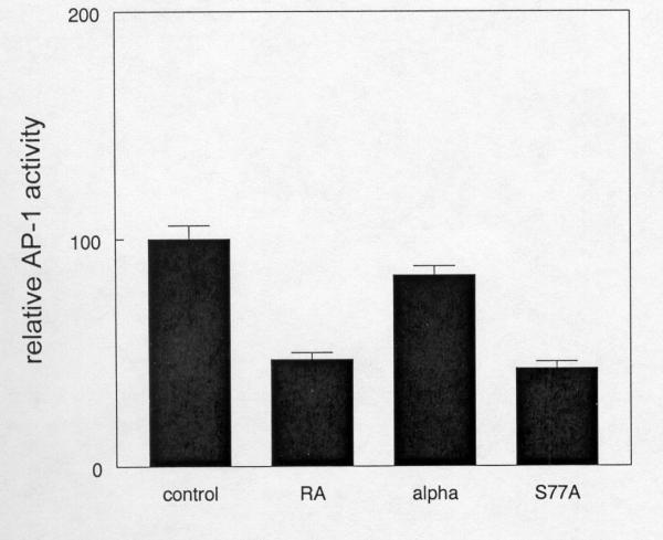 The phosphorylation defective RARα mutant inhibits AP-1 activity in the absence of RA. Triplicate cultures of SCC25 cells were transiently transfected with a heterologous promoter construct containing an AP-1 response element in the luciferase reporter vector pGL3 as described in Methods. Wild type (alpha) or S77A mutant RARα expression vectors were cotransfected with the reporter constructs. Blank expression vector was used to control for the amount of DNA transfected. Transfected cultures treated with vehicle or 1 μM RA for 24 hours were used as controls for AP-1 inhibition. Relative light units from vehicle treated cells transfected with reporter construct and blank vector were assigned an arbitrary AP-1 activity value of 100. These experiments were performed three times with similar results. Error bars indicate SEM.