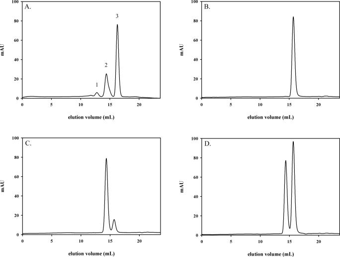 Size-exclusion chromatographic analysis of wild-type and S326C OGG1. ( A ) Non-denatured protein size markers (Sigma). Peak 1, BSA dimer (132 kDa); peak 2, BSA monomer (66 kDa) and peak 3, carbonic anydrase (29 kDa). Purified wild-type OGG1 (100 µg) was analyzed on a Superdex 200 HR column equilibrated with 20 mM Tris–HCl (pH 7.4), 300 mM NaCl at a flow rate of 0.25 ml/min ( B ). Identical runs were performed with 100 µg polymorphic S326C OGG1 ( C ) or 100 µg of both wild-type and S326C OGG1 together ( D ).