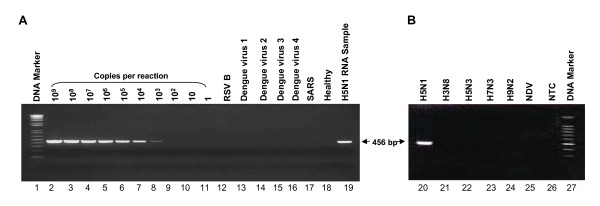Detection of H5N1 avian influenza A virus by one-step RT-PCR . A. Amplification of serially diluted in vitro-transcribed single-stranded <t>RNA</t> (lanes 2 to 11) measured by <t>RiboGreen</t> RNA quantitation reagent and H5N1 RNA extracted from allantoic fluid of infected egg (lane 19). The non-template control is (sterile water) illustrated as