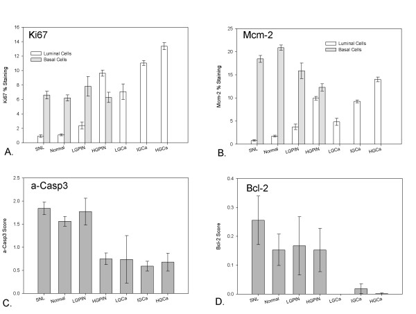 A and B show percent staining for Ki67 and Mcm-2 with 95% confidence intervals across progressive tissue compartments. There is a strong shift in proliferation from basal to luminal cell compartments in both markers. C and D show <t>a-casp3</t> and Bcl-2 scores with 95% confidence intervals. Only the luminal compartment was scored for these 2 markers. For a-casp3 a sharp significant drop in expression was seen in HGPIN and cancer compartments. No differential trend was observed for Bcl-2. Supernormal glands showed significantly higher luminal Mcm-2 indices and higher a-casp-3 activity than normal glands suggestive of a field effect.