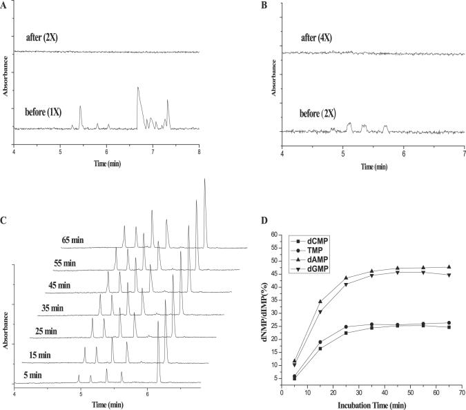 Confirmation of cleanup and enzymatic hydrolysis. ( A ) Removal of <t>dNTPs.</t> Samples were subjected to CE before and after a conventional <t>PCR</t> purification process. No peak was detected even in the 2-fold concentrated sample after purification. ( B ) Removal of primers. dNMP peaks resulting from residual primers were not detected in the 4-fold concentrated sample after purification. ( C ) CE profile of hydrolysis of a PCR product during a time course of phosphodiesterase treatment. dIMP was spiked as an internal standard for comparison. ( D ) Normalized dNMP peak intensities during a time course of phosphodiesterase treatment.