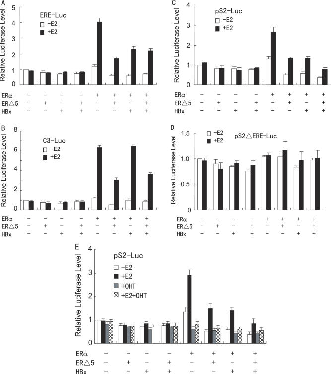 HBx and ERΔ5 have additive effect on repression of specific ERα responsive gene transcription. (A–D) HepG2 cells were co-transfected with 50 ng of the expression plasmid for ERα, 1.0 µg of the expression plasmid for FLAG-tagged HBx, 50 ng of the expression plasmid for ERΔ5, and 0.2 µg of ERE-Luc ( A ), C3-Luc ( B ), pS2-Luc ( C ) or pS2ΔERE-Luc ( D ), in the absence or presence of 10 nM E 2 . The luciferase activity obtained on transfection of the respective luciferase reporter without exogenous ERα, ERΔ5 and HBx in the absence of E 2 was set as 1. ( E ) HepG2 cells were co-transfected with 0.2 µg of pS2-Luc, 50 ng of the expression plasmid for ERα, 1.0 µg of the expression plasmid for FLAG-tagged HBx and 50 ng of the expression vector for ERΔ5. Cells were then treated with control (0.1% ethanol) vehicle, 10 nM E 2 , 100 nM 4-hydroxytamoxifen (4-OHT) or 10 nM E 2 plus 100 nM 4-OHT. The luciferase activity obtained on transfection of pS2-Luc without exogenous ERα, ERΔ5 and HBx in the absence of E 2 was set as 1.