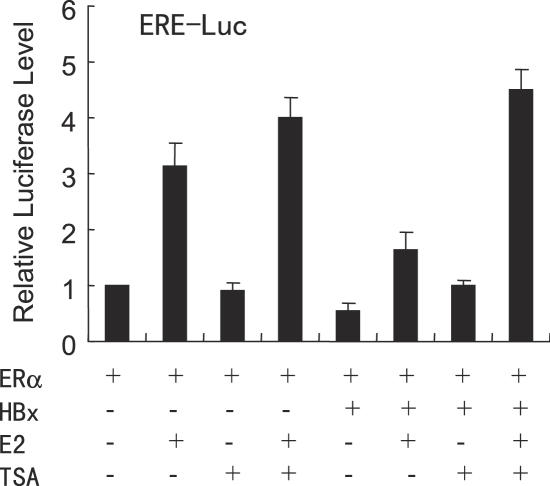 Treatment of hepatoma cells with the specific HDAC inhibitor TSA causes a drastic relieving of HBx-induced repression of ERα transactivation. HepG2 cells co-transfected with 0.2 µg of the ERE-Luc reporter, 50 ng of the expression vector for ERα, 1.0 µg of the expression plasmid for HBx. Cells were then treated with control (0.1% ethanol) vehicle, 10 nM E 2 or 100 nM TSA as indicated. The luciferase activity obtained on transfection of ERE-Luc and ERα without exogenous HBx in the absence of E 2 and TSA was set as 1.