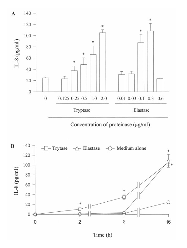 Effect of tryptase and elastase on the release of IL-8 from A549 cells. Cells were incubated with various concentrations of tryptase or elastase at 37°C for 16 h (A), or with 2 μg/ml tryptase or 0.3 μg/ml elastase for 2 h, 8 h and 16 h (B). Values shown are mean ± SE for 5 separate experiments. * P