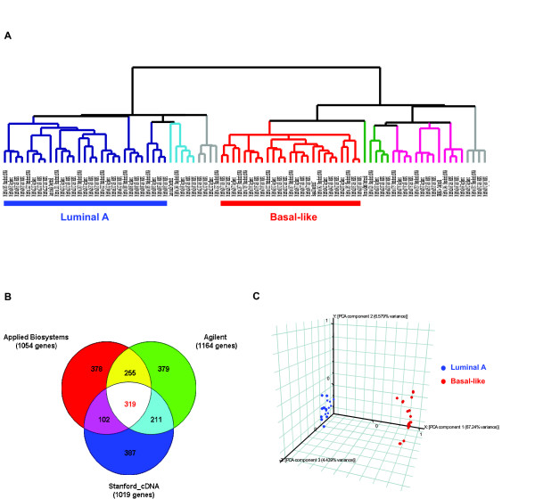 Validation of the luminal A and basal-like subtypes using three microarray platforms . (A) Unsupervised hierarchical clustering of 20 breast tumor tissues analyzed by Applied Biosystems (two replicates per sample), Stanford cDNA and Agilent arrays using the 510 mapped intrinsic genes. The data from each platform were first transformed independently and then combined for clustering: the level of expression of each gene in each sample (Applied Biosystems microarrays: normalized signal intensity; Stanford cDNA and Agilent microarrays: normalized log2 ratio of the sample vs. the reference (UHR)) was transformed into a log2 ratio relative to the median level of expression of that gene across all the samples within the data set of the given platform. The experimental dendrogram displays the clustering of the tumors into distinct subgroups. Branches are color-coded according to the subtype with which the corresponding tumor sample showed the highest correlation. Tumors with low correlation (