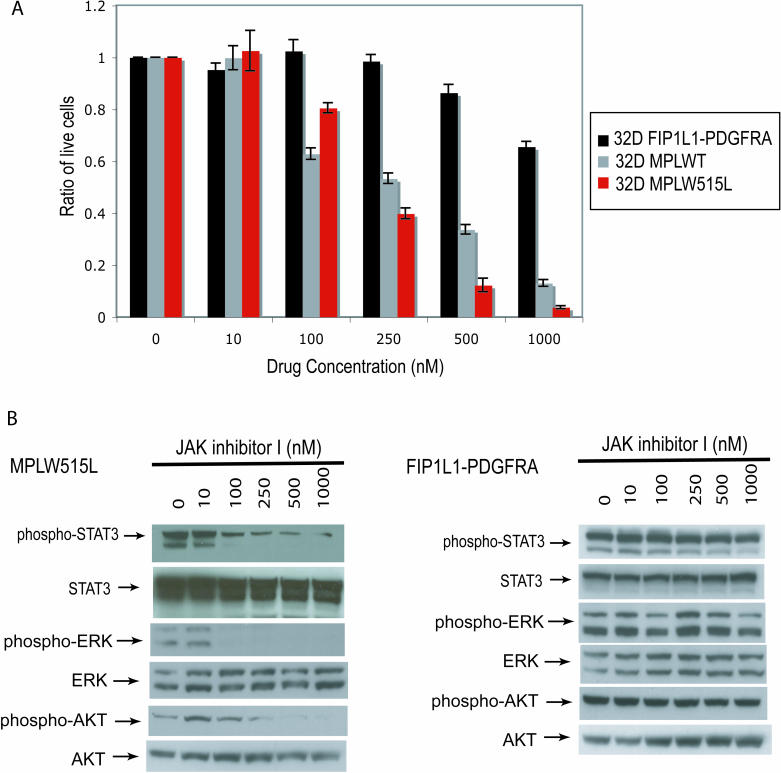 32D MPLW515L Cells Are Sensitive to JAK Inhibitor I (A) Dose-dependent inhibition of growth of 32D MPLW515L and 32D MPLWT cells but not 32D FIP1L1-PDGFRA cells with increasing doses of JAK Inhibitor I. (B) Reduction in STAT3 phosphorylation in 32D MPLW515L cells but not 32D FIP1L1-PDGFRA cells with increasing doses of JAK Inhibitor I. Cells were incubated with varying drug concentrations for four hours and then collected for Western blot analysis.