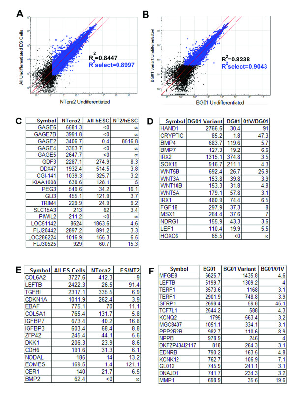 Diploid pluripotent EC cell line NTera2 and karyotypically abnormal hESC line BG01V can be distinguished from normal hESCs using Illumina array. Comparison of NTera2 and pooled hESC sample resulted a correlation coefficient of 0.8997. Two lists of genes, which were specifically expressed in NTera2 (C) or in hESCs (E) were identified. Likewise, while sharing similarities with BG01 (B, correlation coefficient= 0.9043), BG01V was different from BG01 in expression for many genes, particularly genes from the TGFβ pathway (D, F). Black dots represent genes that were detected at > 0 expression level, blue dots represent genes that were detected both at > 0 expression level and at > 0.99 confidence. Genes plotted outside the two thin red lines were detected at > 2.5- fold difference.