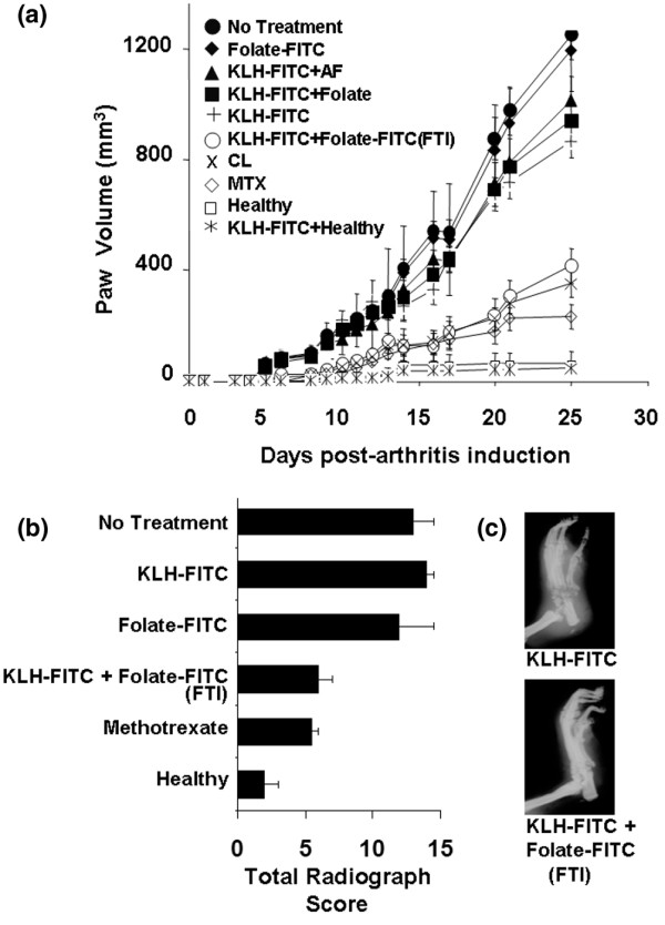 Effect of folate-targeted immunotherapy on joint inflammation and bone/cartilage destruction in AIA rats. Where indicated, AIA rats were immunized with a 1:1 suspension of keyhole limpet hemocyanine-fluorescein isothiocyanate (KLH-FITC) and TiterMax Gold adjuvant to generate a high anti-FITC antibody titer. On day 0, rats were induced to develop AIA via the footpad method. (a) Treatments began on the day of arthritis induction, and rats were given i.p. doses twice a week at 375 nmole folate-FITC/kg. Treatment groups included: AIA rats not immunized and not treated (No Treatment), non-immunized rats treated with folate-FITC (Folate-FITC), AIA rats immunized against fluorescein and treated with non-targeted aminofluorescein (KLH-FITC + AF), AIA rats immunized against fluorescein and treated with folic acid alone (KLH-FITC + Folate), AIA rats immunized against fluorescein but not further treated (KLH-FITC), AIA rats immunized against fluorescein and treated with folate-FITC (KLH-FITC + folate-FITC [FTI]), AIA rats treated on days 8, 16, and 23 with 3.6 mg/kg clodronate liposomes (CL), AIA rats treated with methotrexate (MTX; 0.75 mg/kg per week, i.p.), immunized healthy rats (KLH-FITC + Healthy), and untreated healthy rats (Healthy), respectively. Data are representative of two independent experiments ( n = 5 rats/group; [folate-FITC] vs. [KLH-FITC + folate-FITC (FTI)], p