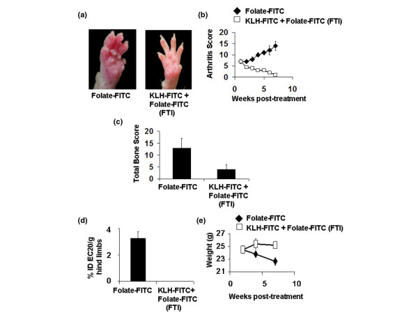 Effect of folate-targeted immunotherapy (FTI) on mice with established collagen-induced arthritis. Mice were immunized with keyhole limpet hemocyanine-fluorescein isothiocyanate (KLH-FITC) in an equal volume of TiterMax Gold adjuvant to generate a high anti-FITC antibody titer. Seven days after arthritis induction, when the average arthritis score had reached 7, mice were treated daily with 600 nmole/kg folate-FITC until day 38. (a) Differences between folate-FITC-treated and untreated mice were easily visualized. (b) Each limb was evaluated weekly by an individual blinded to the treatment groups and was assigned an arthritis score (see Methods and methods). (c) Bone erosion was analyzed on day 49 from radiographs by a radiologist blinded to the treatment groups. (d) Uptake of EC20 in both hind limbs was determined as a measure of activated macrophage accumulation on day 49, represented as percent injected dose of EC20 per gram hind limbs, for instance, %ID EC20/g hind limbs. (e) The change in weight of mice after arthritis induction was measured regularly.