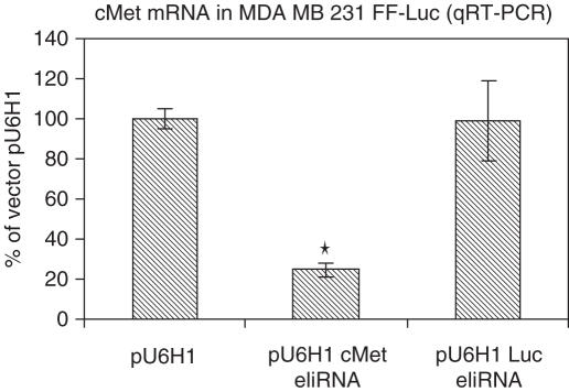 Cells were transiently transfected with vector alone, a vector expressing 250 bp of luciferase dsRNA or a vector expressing 121 bp of c-met dsRNA using Lipofectamine 2000. Forty-eight hours after transfection, total RNA was isolated using Trizol and levels of c-met were quantified. The levels of c-met RNA were expressed relative to those found in vector alone transfected cells. * P