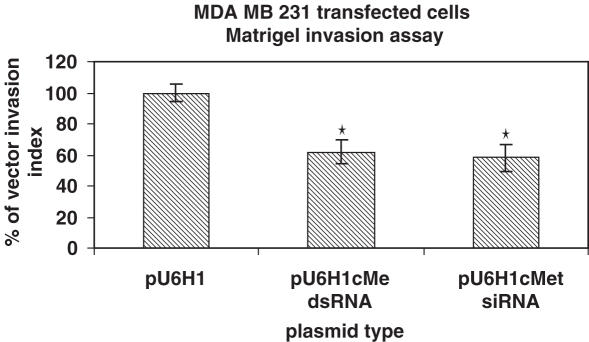 MDA-MB-231 cells were transiently transfected with either a plasmid encoding c-met long dsRNA or c-met siRNA by Lipofectamine 2000. Twenty-four hours after transfection, cells were added to a transwell chamber coated with matrigel, allowed to migrate for 48 h and the number of cells from the lower compartment of the chamber was compared with those transfected with vector alone. * P