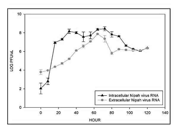 Nipah virus replication in Vero cells. Vero cells were infected with Nipah virus at MOI of 0.2. At selected intervals, total RNA was isolated and the Nipah virus RNA levels were quantified using the SYBR ® Green I-based qRT-PCR assay in equivalent log PFU. A latent phase of at least eight hours followed by an exponential increase in the virus RNA level were noted for the intracellular Nipah virus RNA.