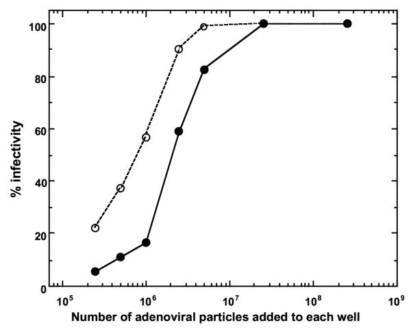 Effect of the amount of adenoviral vectors on in situ transduction of target cells on a solid surface. Ad5.CMV-LacZ was treated with 15 μg/ml sulfo-NHS-LC-biotin, followed by the removal of non-virion-associated biotinylation reagent. Varying numbers of the resulting biotinylated adenoviral vectors (2.5 × 10 5 – 2.5 × 10 8 viral particles per well) were added to streptavidin-coated wells (well diameter, 0.64 cm; Reacti-Bind Streptavidin Coated Polystyrene Wells) for immobilization, followed by the removal of unbound viral particles. Then, D-17 cells (8 × 10 2 cells per well) were placed on the wells and cultured at 37°C for 48 h. Cells were fixed with glutaraldehyde and stained for the expression of the lac Z gene (●). Unmodified Ad5.CMV-LacZ was used free in solution as a control (○). Data shown are representative of five independent experiments.