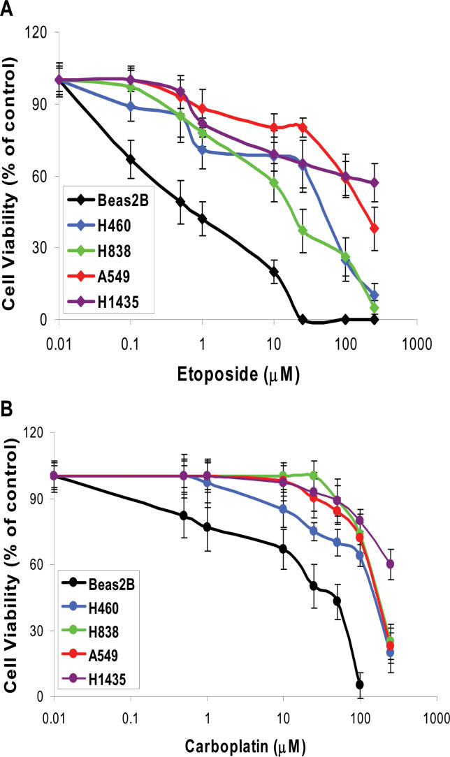 Increased NRF2 Activity Confers Chemoresistance BEAS2B cells and cancer cells were exposed to etoposide (A) or carboplatin (B) for 72 h, and viable cells were determined by MTT assay. BEAS2B cells displayed enhanced sensitivity whereas cancer cells with dysfunctional KEAP1 activity demonstrated reduced chemosensitivity to etoposide and carboplatin treatment. Data are presented as percentage of viable cells relative to the vehicle-treated control. Data are the mean of eight independent replicates, combined to generate the mean ± SD for each concentration.