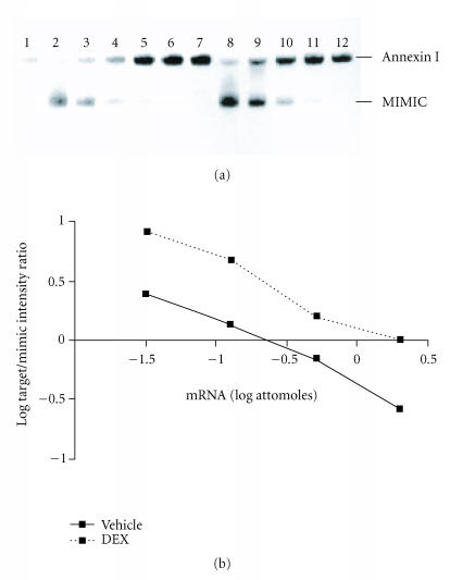 DEX effects on RA synovial fibroblast annexin I mRNA. Panel (a): RNA extracted from human RA FLS was subjected to competitive <t>RT-PCR</t> with (lanes 2–6 and 8–12) or without (lanes 1 and 7) <t>mimic.</t> Lanes 1–6: control; lanes 7–12: DEX 10 −7 M for 24 hours. Annexin I mRNA content was greater in DEX-treated than vehicle-treated cells. Representative of n = 4 separate experiments from 4 separate RA donors. Panel (b): the log of the ratios of the annexin I and mimic PCR product band intensities were graphed as a function of the log of the amount of mimic added to the reaction. Increased annexin I mRNA is seen in DEX-treated RA synovial fibroblasts. Representative of n = 4 separate experiments from 4 separate RA donors.