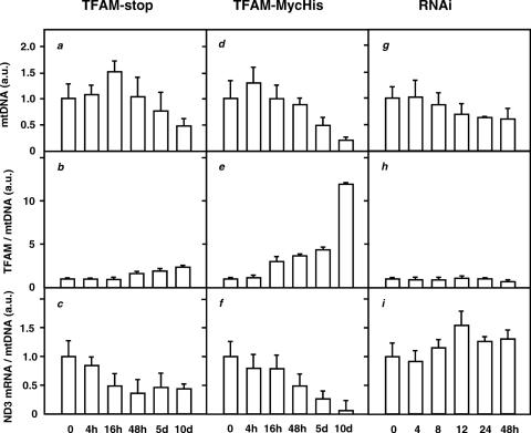 Effects of induced expression of TFAM-stop and TFAM-MycHis and of RNAi knockdown of TFAM expression. Mitochondrial proteins, DNA and RNA were analysed from Flp-In™ T-Rex™ -293 cells stably transfected with the TFAM-stop (a–c) or TFAM-MycHis construct (d–f), induced over the times indicated or from HEK293T cells (g–i) following transfection with siRNAs Si2 and Si4 over the times indicated. In each case, error bars indicate means ± SEs from at least three independent experiments. a.u., arbitrary units. Measurements of mtDNA levels (a, d and g) are arbitrarily normalized to the mean values for uninduced or untreated cells. For cells under TFAM induction, the measurements were made by two independent methods, Southern blotting and Q-PCR and the values plotted for each time point are the means of measurements by the two methods, shown in Supplementary Figures 1 and 2. ( b , e and h ) show TFAM protein levels normalized to the mtDNA levels shown in ( a , d and g ), then normalized against the level in uninduced or untreated cells. ( c , f and i ) show ND3 mRNA levels normalized first against the 5S rRNA loading control, then against the mtDNA levels shown in (a, d and g), then finally against the level in uninduced or untreated cells. Samples of the raw data and compiled data for TFAM protein, mtDNA and RNA levels on which this figure is based, are shown in Supplementary Figures 1–3.